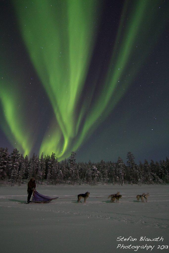 Schlittenhunde und Nordlichter